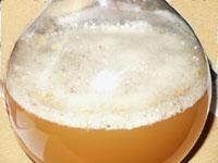 fermentation basse
